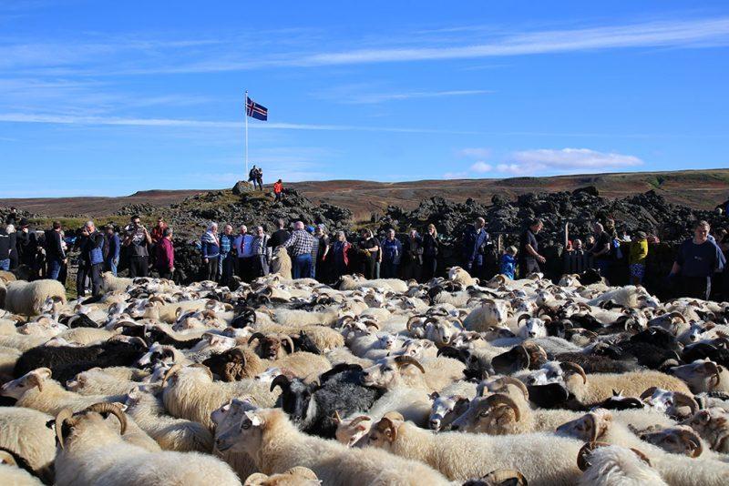Rettir auf Island